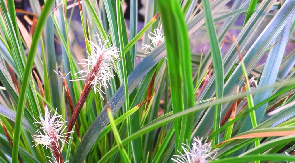 Carex 2014